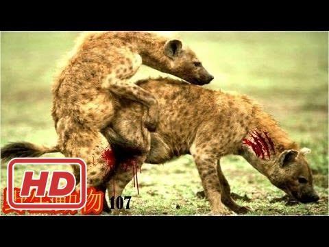 【ハプニング18禁】【動物の戦い】野生動物-野生動物 戦い-トップ 10 のハイエナの攻撃