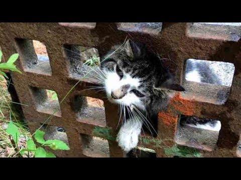 【九死に一生】「誰か助けて!」排水溝の蓋にハマって身動きができなくなった猫を救った救出方法とは?【感動する話】