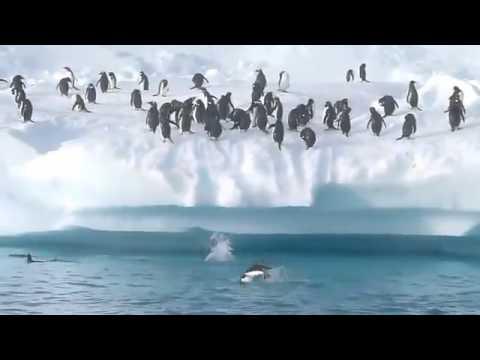 動物と面白いペンギンの生活やペンギン楽しいです