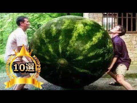 【衝撃】思わず二度見してしまう画像 世界の珍しい貴重な果物10選【こんなの見たことない!】