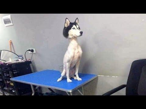 「絶対笑う」最高におもしろ犬, 猫のハプニング, 失敗動画集・かわいい犬 , 猫