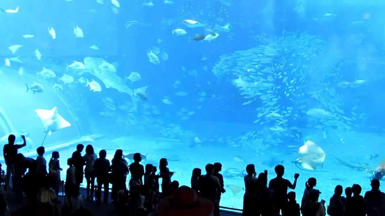 水族館大魚突然死亡 Sudden death of a fish in Okinawa aquarium沖縄美ら海水族館に突然死亡した魚