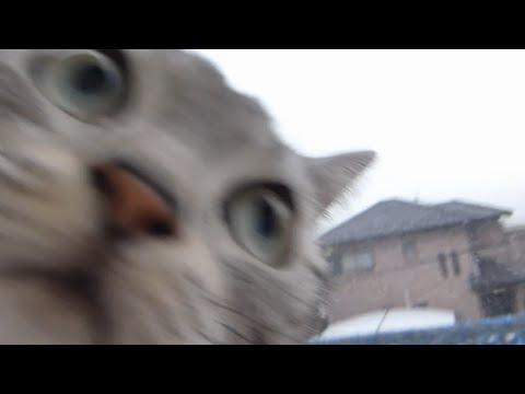 ありえないでしょ?!猫が小鳥に怯えるなんて!!!(前編)~母ちゃん情けない -Why cat afraid of a little bird?
