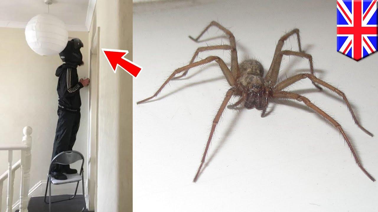 クモ恐怖症の女性がクモに遭遇 彼女がとった方法は…? – トモニュース