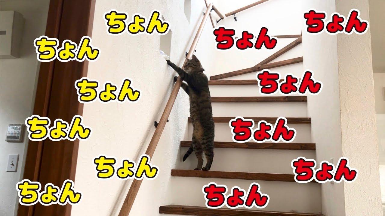 イタズラ好きな猫たち!
