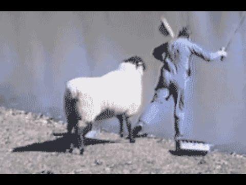 【動物たちの爆笑動画】 思わず吹いたwww動物のおもしろ爆笑シーン