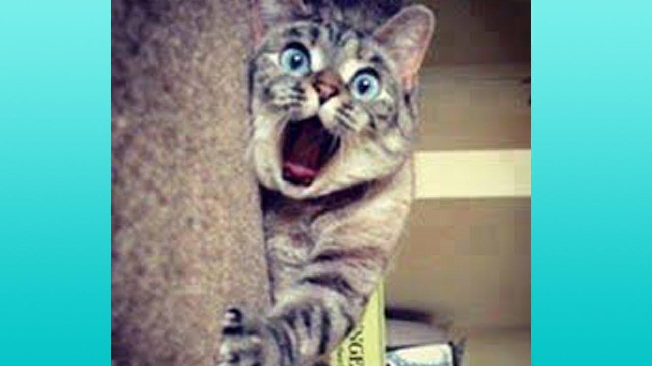 【かわいい猫】絶対笑う、おもしろ猫、思わず吹き出すハプニング集【これってマジ…!?】