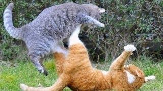 猫 喧嘩 死にゃんこの衝撃と興奮の修羅場まとめ