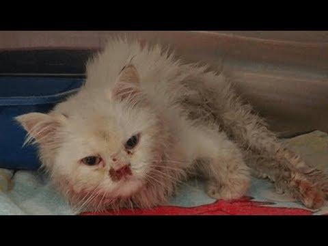 【奇跡の連続】危険な場所で発見された全身ボロボロの猫。「リスト」に載せられた猫の運命はいかに?!【感動実話】