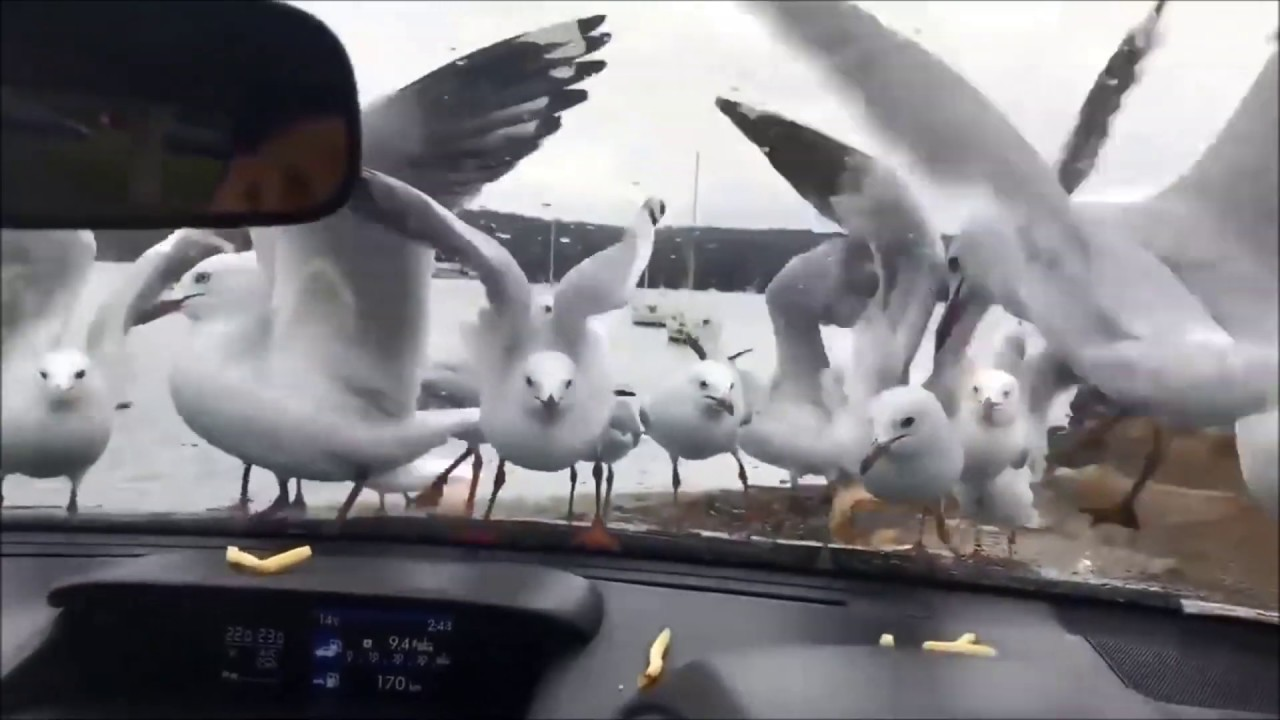笑っちゃいけないけど笑える㉑車の事故・アクシデント動画