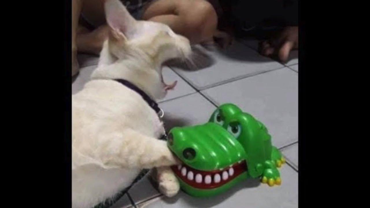 「犬, 猫ドッキリ」何回見ても笑っちゃう犬, 猫の面白いハプニング, 失敗画像集