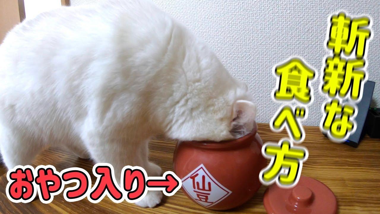 壺の中のおやつを必死に食べる猫が可愛いすぎた…!