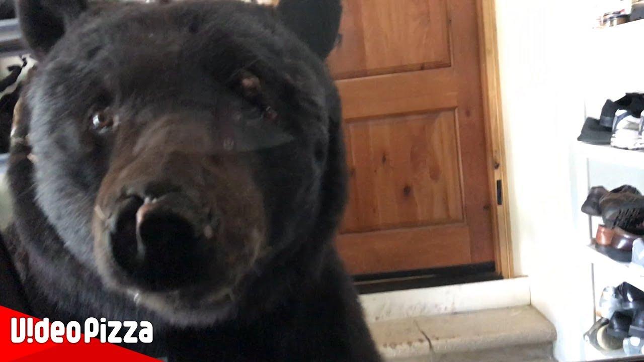 【恐怖】クマと家で突然の遭遇!思わず車に逃げ込んだ結果…【Video Pizza】