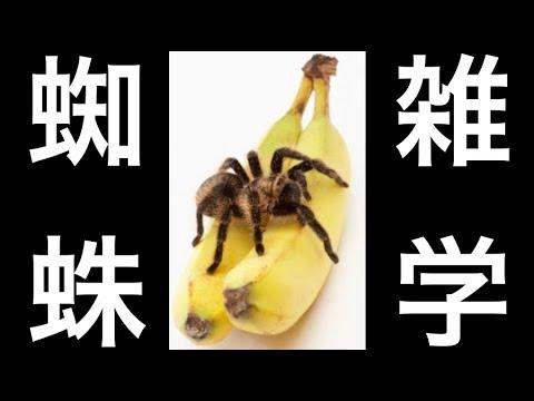 【蜘蛛の雑学】衝撃!実は良い子!「益虫」の蜘蛛は殺さない方が良い!害虫を食べてくれる存在!