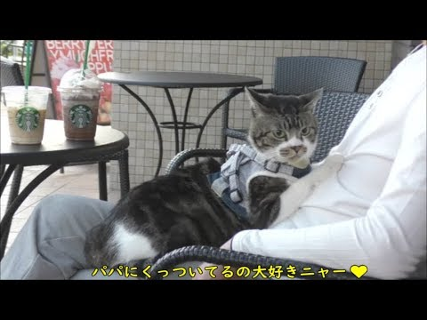 猫と一緒にスタバへ☆テラスでお茶☆リキちゃんのおやつ忘れてショック・・☆猫とお出かけ【リキちゃんねる 猫動画】Cat video キジトラ猫との暮らし