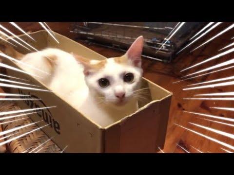 【爆笑】絶対に笑ってはいけない猫動画 電車では絶対にみないで