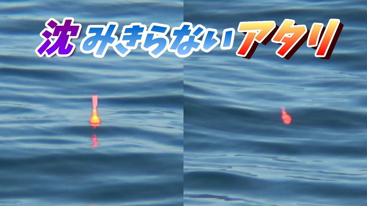 【必見】泳がせ釣りの珍しいウキアタリの一部始終、釣れた魚はまさかの・・・