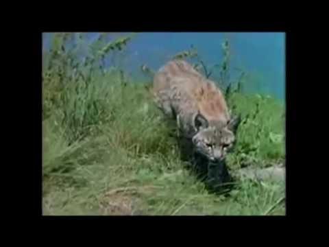 【閲覧注意】猛獣(クマ)が人間を襲う衝撃映像⑦