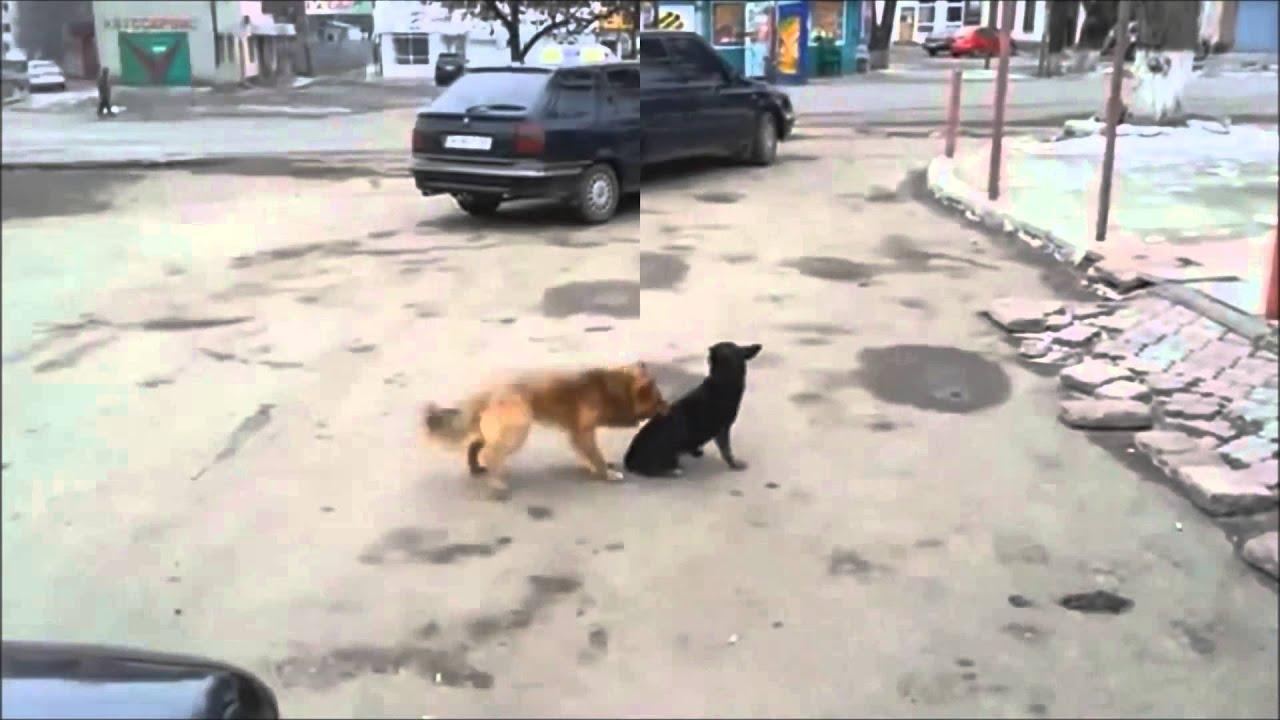 犬 ワンちゃんのとても情けない失笑の行動  おもしろ動画