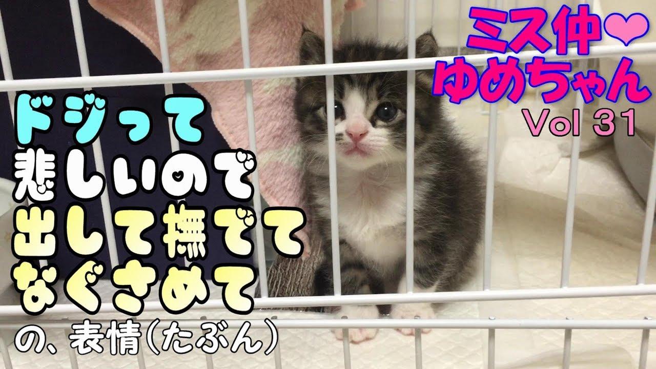 【子猫 成長記録31】ドジって撫でてなぐさめて欲しい姿が可愛い子猫♩【cute kitten 31】