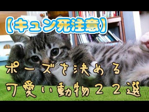 【キュン死注意】カメラにポーズを決める可愛い動物22選/【グロ】閲覧注意度Level Max