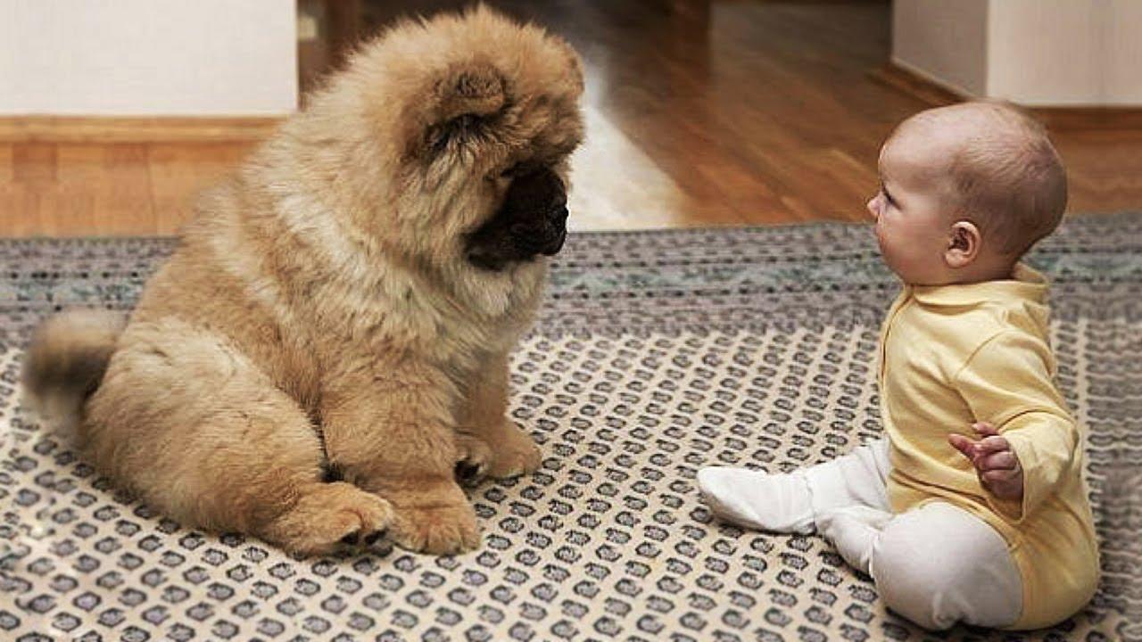 【面白い動画】 かわいい猫 – かわいい犬 – 最も面白いペットの動画 #16
