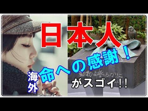 【海外の反応】「外国人も絶句!」 日本人は、命をいただいた動物にも感謝してるとに称賛の声が!