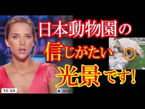 日本の国民性をうまく表している光景が動物園で目撃され、SNSに投稿された動画が100万再生超えし海外で話題に!(すごいぞJAPAN!)