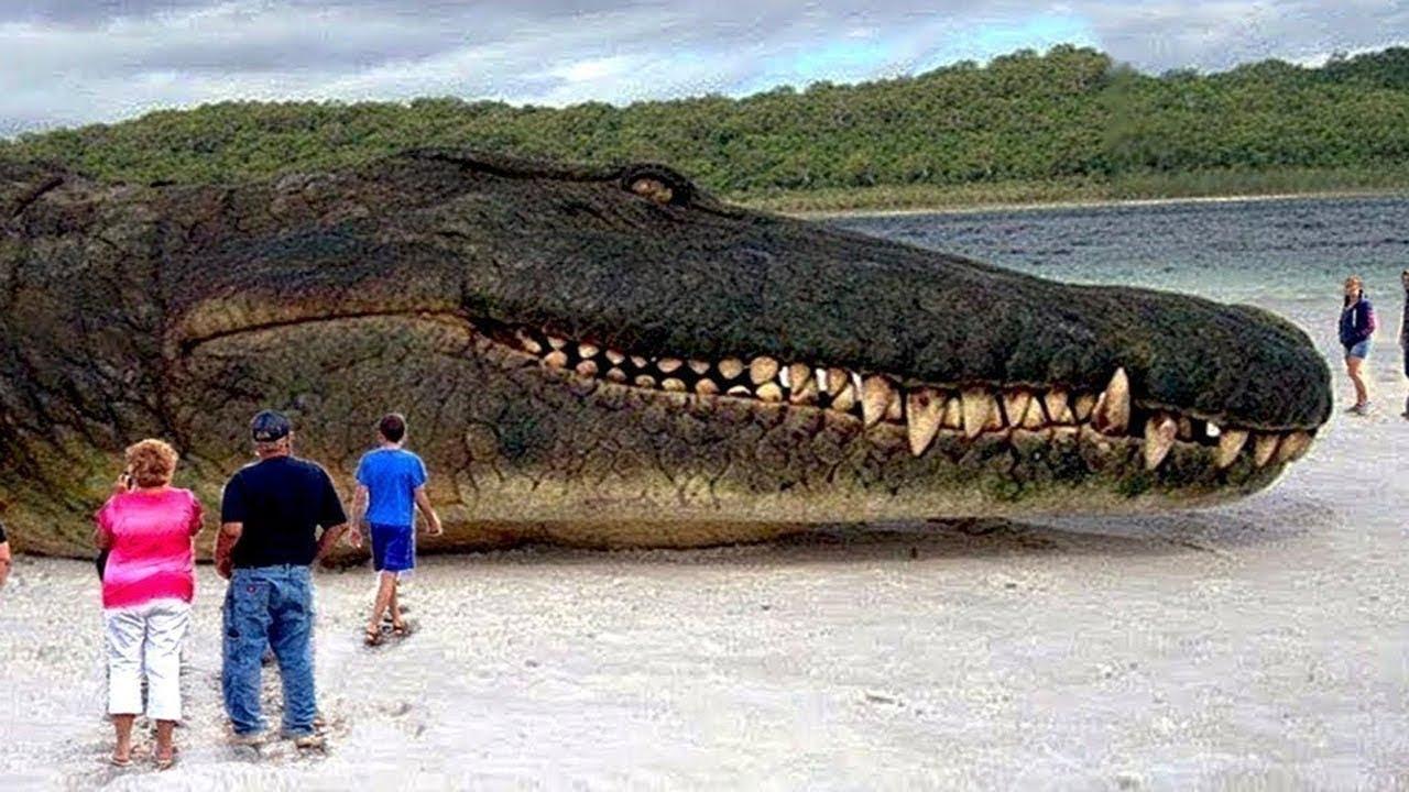 実在する巨大な動物10選