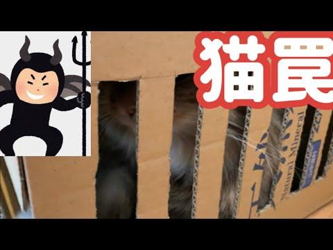 スーパーにゃんこトラップ1号でイタズラ猫を捕獲します!【自作猫罠】