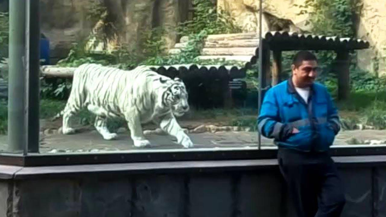 動物園で撮影された信じられない15の瞬間