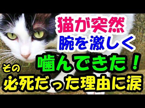 飼い猫が突然飼い主の右腕を引っ掻き、思いっきり噛みついてきた! 猫が必死になった理由に涙【猫の不思議な話】【朗読】